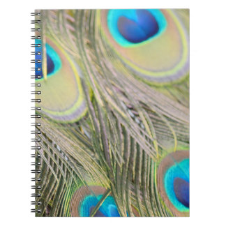 Peacock Feathers Spiral Notebook