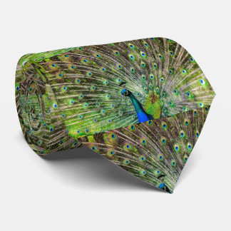Peacock Feathers Tie