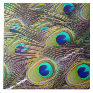 Peacock Feathers Tile