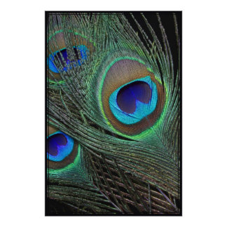 Peacock Feathers Vertical Poster -40x60