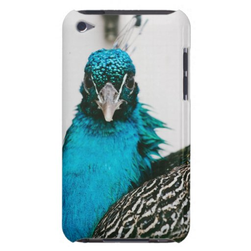 Peacock Frontal Portrait iPod Touch Cover
