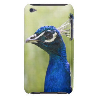 Peacock head barely there iPod cases