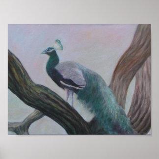 PEACOCK IN AN OAK TREE Poster