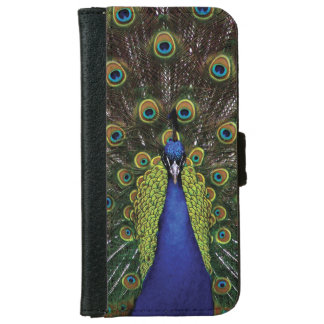 Peacock iPhone 6 Wallet Case