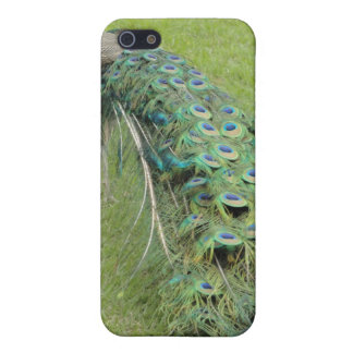 Peacock iPhone 5/5S Case