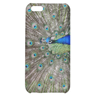 Peacock Case For iPhone 5C