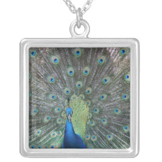 Peacock male in full fan photograph silver plated necklace