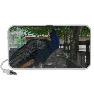 Peacock on a roof iPhone speakers
