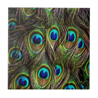 peacock pattern small square tile