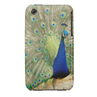 Peacock Phone Case iPhone 3 Cases