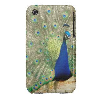Peacock Phone Case iPhone 3 Cases
