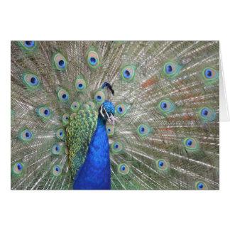 Peacock photo card