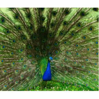 Peacock Photo Sculpture