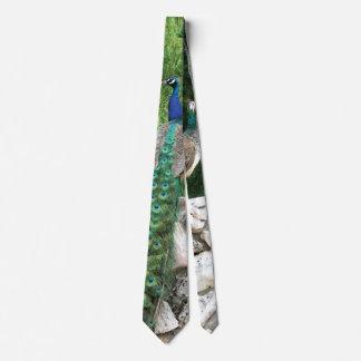 Peacock Photo Tie
