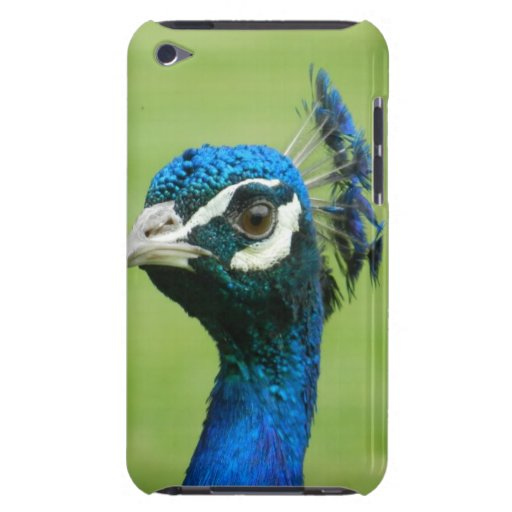 Peacock Photograph iPod Touch Covers