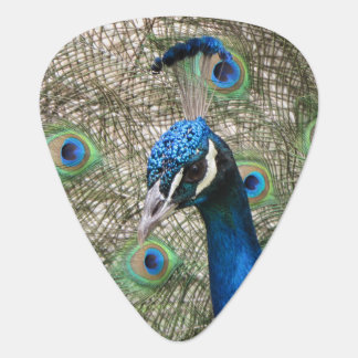 Peacock Plectrum
