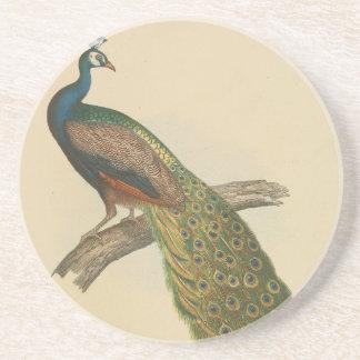 Peacock pretty coaster