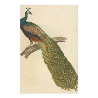 Peacock pretty stationery