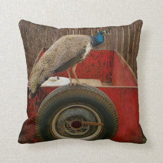 PEACOCK RESTING ON OLD RED TRAILER CUSHION