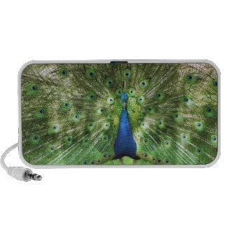 Peacock Speaker