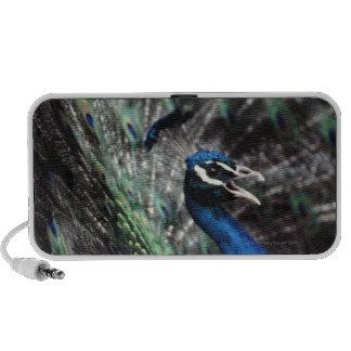 peacock laptop speakers