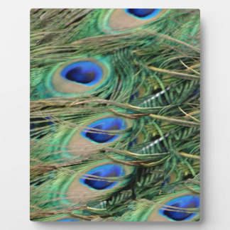 Peacock Tail Feather Blue Eyes With Growth Photo Plaque