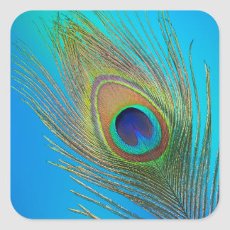 Peacock Tail Feather Square Sticker