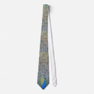 Peacock (the One) Tie