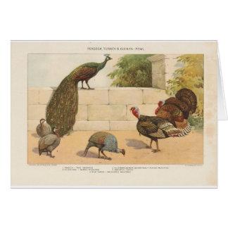 Peacock,Turkey, & Guinea Fowl Card