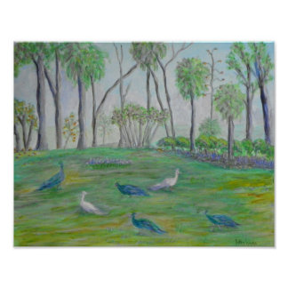 PEACOCKS IN OLD FLORIDA Poster