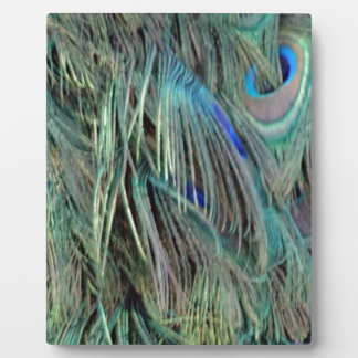 Peafowl Eye Feathers Blue And Green Plaque