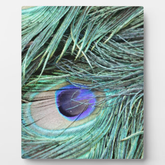 Peafowl Feather Eye Display Plaques