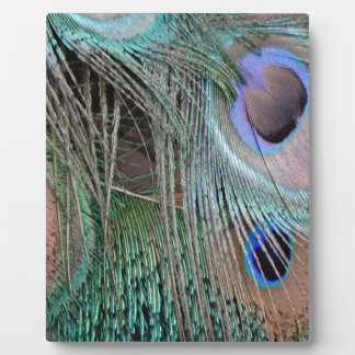 Peafowl Feathers And Eyes Photo Plaque