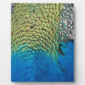 Peafowl Feathers Deep Blue And Gold Colors Photo Plaques