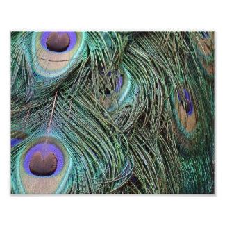 Peafowl Feathers Art Photo