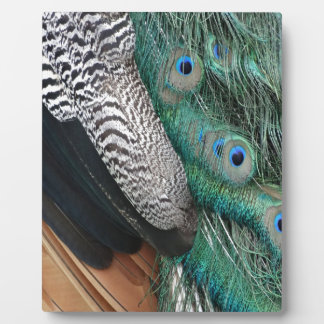 peafowl feathers small eyes plaques