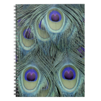 Peafowl Feathers With Big Eyes Notebooks