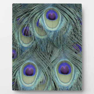 Peafowl Feathers With Big Eyes Plaque