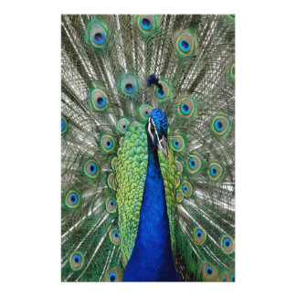 Peafowl Paradise Stationery