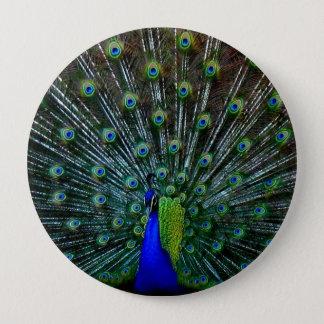 """Peafowl Plumage"" Pin"