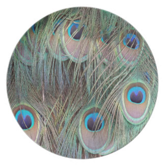 Peafowl Tail Feathers Party Plate