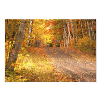 Peak Fall Foliage Season in the U. P. Photographic Print