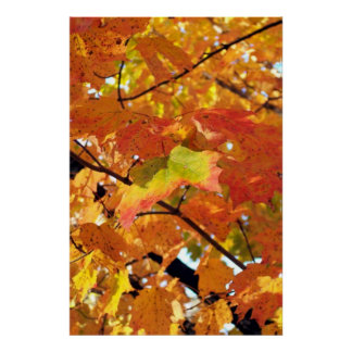 Peak Foliage in Autumn Poster