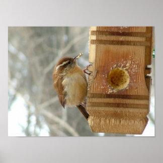 Peanut butter bird poster