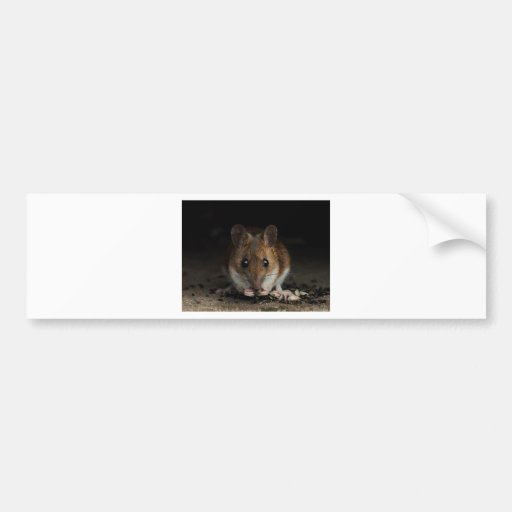 Peanut the Wood Mouse Bumper Stickers
