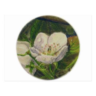 Pear Blossom Dream Postcard