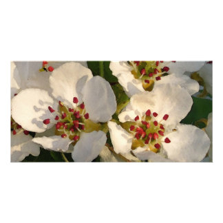 Pear Blossoms Watercolor-like Picture Card