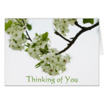 Pear Tree Branch Thinking of You, Blank Inside Note Card
