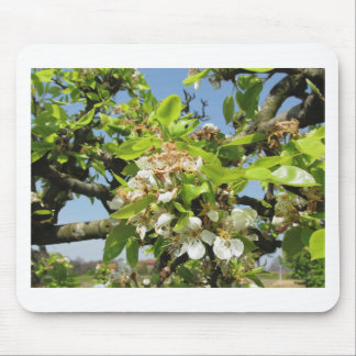 Pear tree branches with blossoms mouse pad