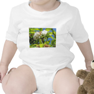 Pear tree branches with blossoms baby bodysuits
